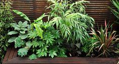 How To Urban Garden Urban Jungle Garden Design Clapham, London