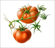 Two Tomatoes.  Susannah Blaxill