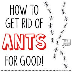 How to Get Rid of Ants for Good! | Inside the Fox Den - Did this in my house and now I am ant free!
