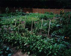 10 inspiring urban gardens. And a link to lots of resources on urban farming: http://pinterest.com/organicconsumer/urban-gardening/