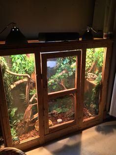 Chameleon Terrarium, Terrarium Reptile, Aquarium Terrarium, Terrariums, Reptile Cage, Reptile Habitat, Reptile Room, Chameleon Enclosure, Reptile Enclosure