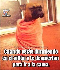 New memes en espanol dormir chistosos Ideas Spanish Jokes, Funny Spanish Memes, Funny Jokes, Funny Images, Funny Pictures, Chesire Cat, New Memes, Memes Humor, Kawaii