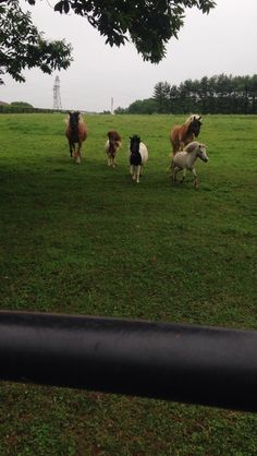 All 5 of our horses coming down to us