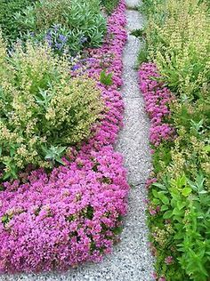1000 Images About Ground Covers On Pinterest Ground 640 x 480