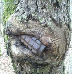 A grenade (most probably still live) was swallowed by the tree trunk over the passing decades. Image credits: dasBILD