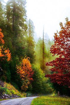 Foggy fall day (Columbia River Gorge, Washington) by Darrell Wyatt cr.