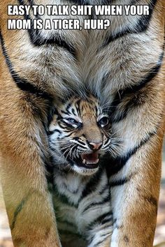 A baby tiger cub hiding underneath its mother. Animals And Pets, Baby Animals, Funny Animals, Cute Animals, Wild Animals, Beautiful Cats, Animals Beautiful, Big Cats, Cats And Kittens