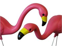 No home is complete without plastic pink flamingos.