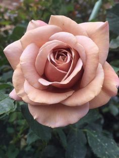 Blumig ⚜ Romantique Rose ⚜ Issues to Contemplate Earlier than Looking for Wedding cere