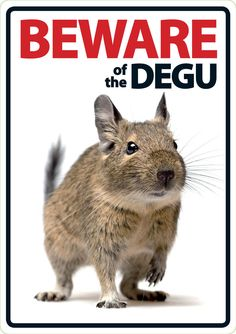 Beware of The Degu A5 Plastic Sign 6400 | eBay