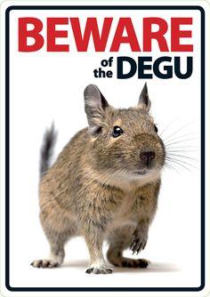 Beware of The Degu A5 Plastic Sign 6400 | eBay