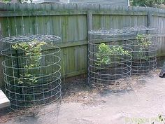 For the last two years I have been pondering what the best protection for my blueberries would be. In the past, I have draped bird netting. Bird Netting, Garden Netting, Blueberry Plant, Blueberry Bushes, Potager Garden, Garden Trellis, Garden Plants, Fruit Bushes, Fruit Trees