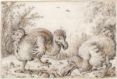 Cloning Extinct Species.  Roelandt Savery's depiction of the now extinct Dodo bird
