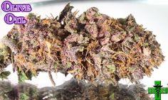 Olive Oyl medical #marijuana. Purple Mr. Nice Guy x Jupiter OG.
