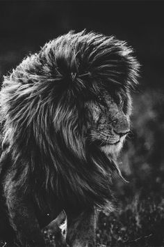 I want hair likes this king of the jungle