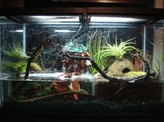 Hello this is a Frog habitat vivarium it is custom made by myself This is 10 gallons about two gallons of water Those are exotic air plants ...