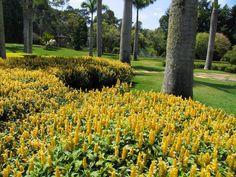 Composições Botânicas : Luiz Carlos Orsini