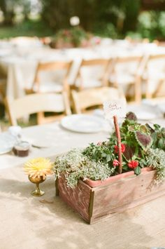 rustic centerpieces in planters // photo by CluneyPhoto.com