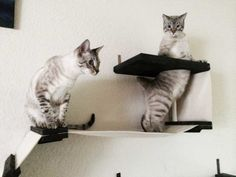 Cat Room, Cat, Cats, Kitten, Kittens, Ideas, Cattery, Interior, Room For Cats, Cat Complex, Complex, Cat Furniture, Minimalistic, Design, Pet, Pets, Animal, Animals, Cute