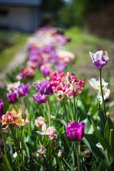 Free stock photo of flowers, garden, petals, green