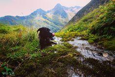 Luke Skywalker, Mountains, Nature, Travel, Spain, Pet Dogs, Voyage, Viajes, Traveling