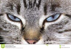 /olhos-de-gato