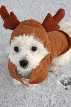 Dog Christmas costume