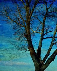 love it #blue #sky #tree #photo - Michelle Thomas - Color Board