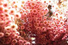 Diary | Flickr - Photo Sharing!