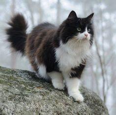 Een kat is echt een koning wezen.