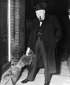 Winston Churchill was a poodle owner; He had a brown French poodle named Rufus, who was treated like a member of the family. French Poodles, Standard Poodles, Poodle Cuts, Puppy Cut, Tea Cup Poodle, Border Terrier, Vintage Dog, Winston Churchill, Hollywood Stars