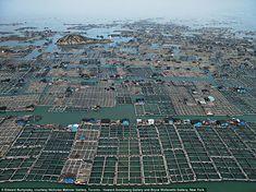 Industry: Marine Aquaculture #1, in Luoyuan Bay, Fujian Province, China, 2012