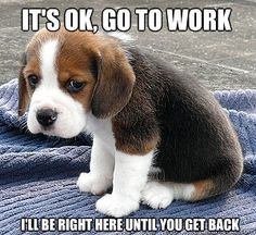 """Job/Resume Funnies: """"It's ok, go to work. I'll be right here until you get back."""""""