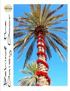Decorated Christmas palm tree at Madeira Beach, FL.