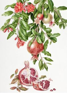 "Akiko Enokido's ""Pomegranate"" in ""American Art Collector"" Magazine"