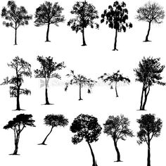 Nature Tree Vector Art Designs