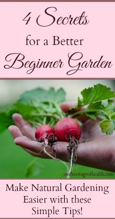 If you're new to organic gardening, try planting radishes. Not only do they seem to respond well to organic treatment, they're among the fastest-growing of garden vegetables. Radishes a… Root Vegetables, Growing Vegetables, Healthy Vegetables, Healthy Fruits, Winter Vegetables, Gardening For Beginners, Gardening Tips, Gardening Websites, Gardening Shoes