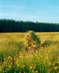 Ghillie Suit 1 (Flowers), 2011 by Jeremy Chandler Tactical Survival, Survival Gear, Airsoft, Sniper Gear, Sniper Rifles, Landscape Photography, Art Photography, Ghillie Suit, Spy Gear