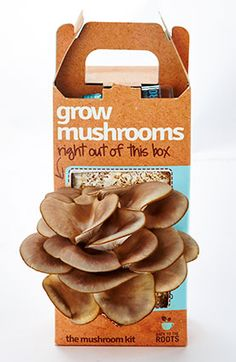 Growing mushrooms at home has never been easier. Mushroom growing kit that grows right out of the box. Start your mushroom garden today. Christmas Gifts For Boyfriend, Diy Christmas Gifts, Boyfriend Gifts, Christmas Things, Homemade Christmas, Christmas Decor, Christmas Ideas, Edible Mushrooms, Stuffed Mushrooms