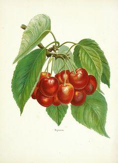 Wright Fruit Growers Guide, Full Volume at Panteek