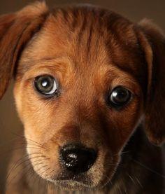 beautiful brown eyes!