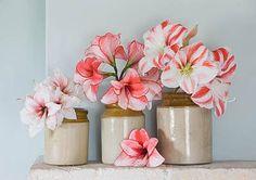 #amaryllis #bloem #flower