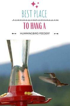 Wild Bird Feeders, Humming Bird Feeders, Humming Birds, Homemade Hummingbird Feeder, Glass Hummingbird Feeders, How To Attract Birds, How To Attract Hummingbirds, Hummingbird Migration, Bird Houses Diy