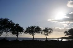 Hawaii Photography Travel Photo Kauai Trees Photograph Tree Silhouette on Water Blue Picture Sunny Sky by SilverBirdBoutique