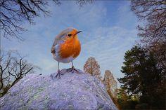 Rotkehlchen im März - Jahreszeiten - Galerie - Community