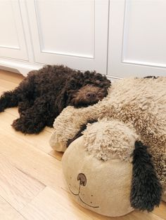 Lagotto Romagnolo puppy @maisiebythebay Lagotto Romagnolo Puppy, Hypoallergenic Dog Breed, Dog Spa, Teddy Bear Dog, Dog Varieties, Doodle Dog, Cute Dog Pictures, Crazy Dog Lady, Goldendoodles