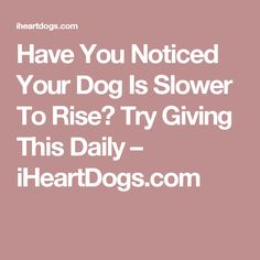 Have You Noticed Your Dog Is Slower To Rise? Try Giving This Daily – iHeartDogs.com