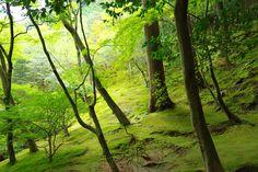 Mossy mountainsides near Kyoto Japan. [60004000] [OC] #reddit