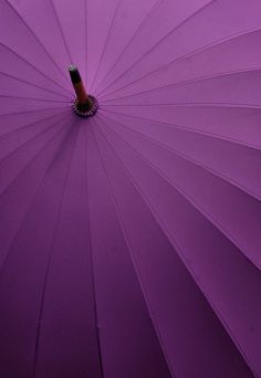 Purple! | purple umbrella