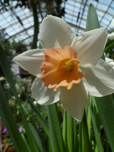 Looking inside